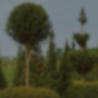 Forme / Arte topiaria
