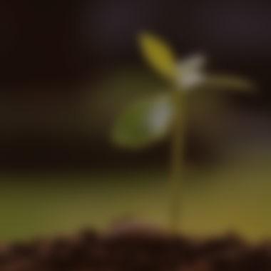 Giovani piante